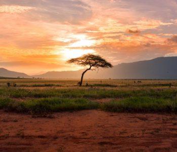 Tswalu – Africa