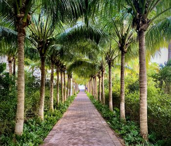 A Magical Palm-Tree Lined Resort